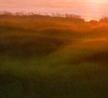 Seagrass Sunset by Aimee Stewart
