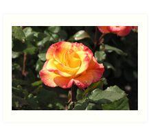 Red Yellow Rose #1 Art Print