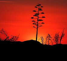Century and Sunset by Kwon Ekstrom