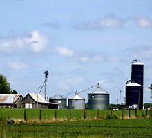 Iowa Farmlands by Marielle O'Brien