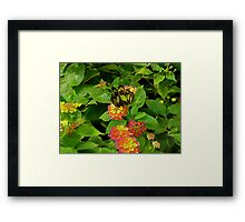 symmetry of butterfly in a garden  Framed Print