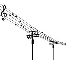 Birds on the wires by esa tia bizarra