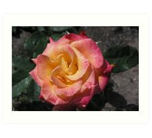 Red Edged Yellow Rose  #17  Art Print