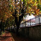 Autumn Colors by thruHislens .