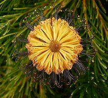 More Blooming Flowers by beeden