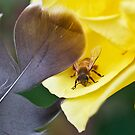 How to Stroke Your Bee by Kenneth Haley