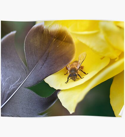 How to Stroke Your Bee Poster