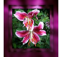 Star Gazer Lillies Photographic Print