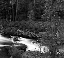 McCloud River by Harry Snowden
