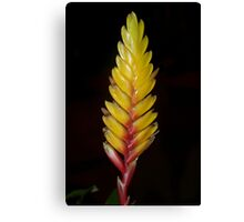Bromeliad bloom Canvas Print