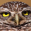 What Are You Looking At? - Burrowing Owl by naturalnomad
