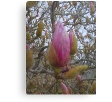 Loads of Buds Canvas Print