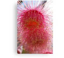 Splashes of Native Bloss (Eucalyptus Blossom) Canvas Print