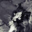 Fluff In Black And White by Josie Eldred