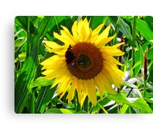 Face of Summer Canvas Print