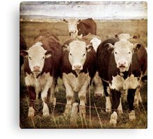 An intimidating trio! Canvas Print