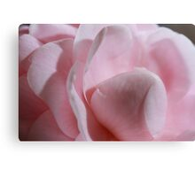 Pink Camellia close up Canvas Print