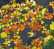 Fallen Leaves by shelleybabe2