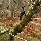 Who Says Dogs Can't Climb Trees? by VoluntaryRanger
