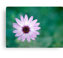 Just One - purple daisy Canvas Print