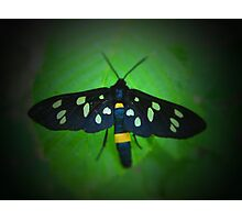Forest Moth Photographic Print