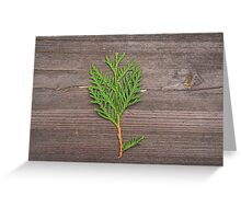 small pine tree Greeting Card