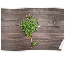 small pine tree Poster