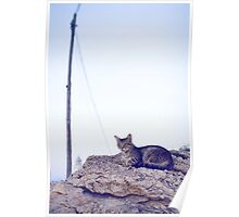 Cat life Poster