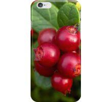 Wild Cowberry iPhone Case/Skin