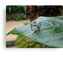 a tiny little Glasswing Canvas Print