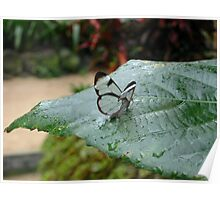 a tiny little Glasswing Poster