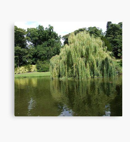 Willow Pond Canvas Print