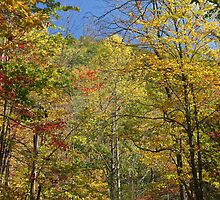 Autumn In The Smokies by Gary L   Suddath
