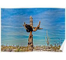Grumpy Cactus  Poster