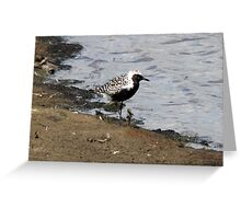 Grey Plover Greeting Card