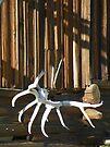 Old Elk Antlers by BettyEDuncan
