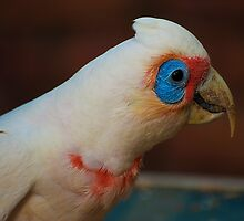 Garden Birds Corella up close by Jaxybelle