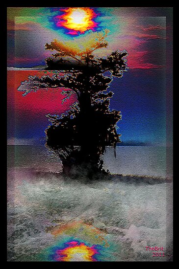 The  Lone Cypress Tree by TheBrit