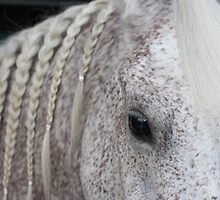 Beautiful Arabian with braids by Debra Thomas