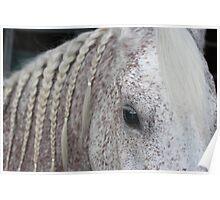 Beautiful Arabian with braids Poster