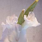 Gladioli Bright  by DIANE  FIFIELD