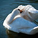 The Swan 2 by Jacinthe Brault