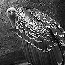Vulture by JMChown
