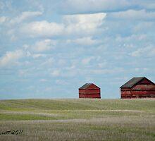 Barns on the prairie by Trish Sweett