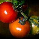 Tomatoes  by ajgosling