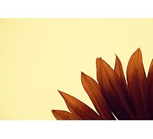 I should like to change into a sunflower most of all Photographic Print
