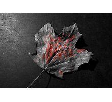 Fallen leaf Photographic Print