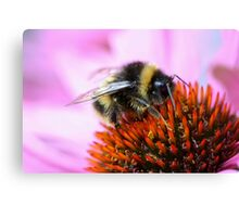 Bumblebee on a flower Canvas Print