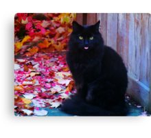Kitty with an attitude! Canvas Print
