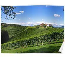 Grape Vineyards. Poster